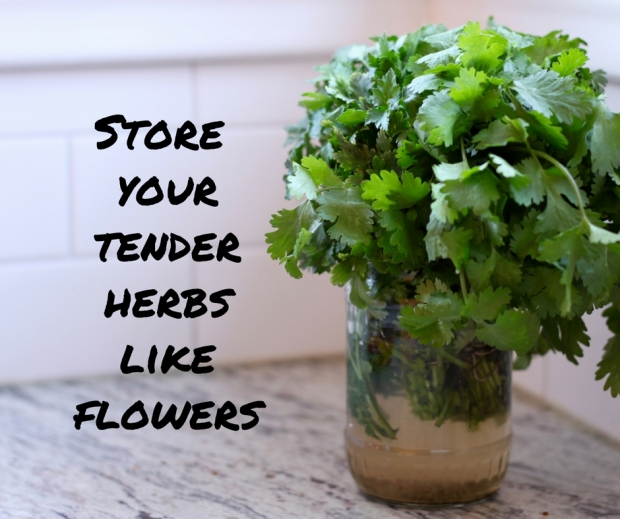 treat-your-herbs-like-flowers